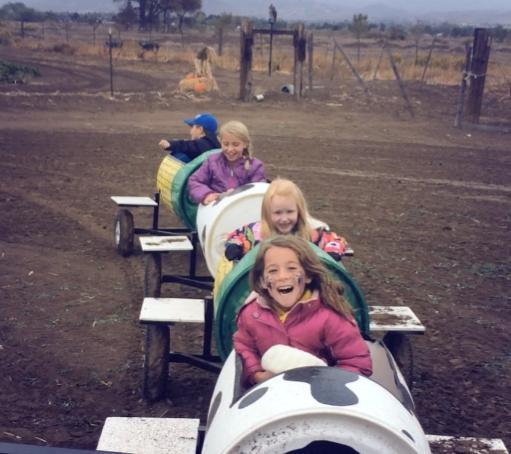 cow train at Andelin Family Farm