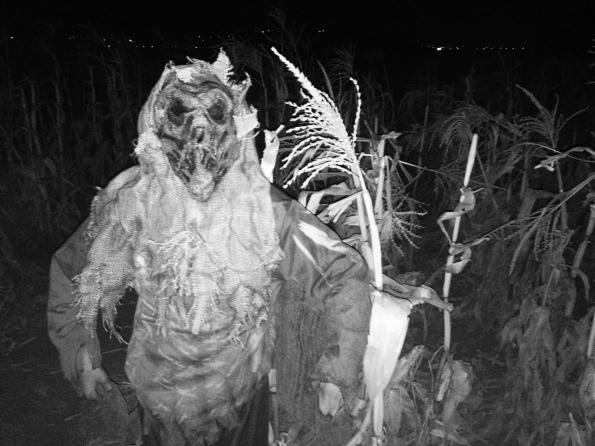 andelin family farm haunted corn maze